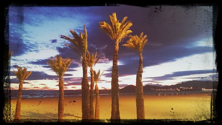 Beautiful View Palmtrees ❤ in the Sunset
