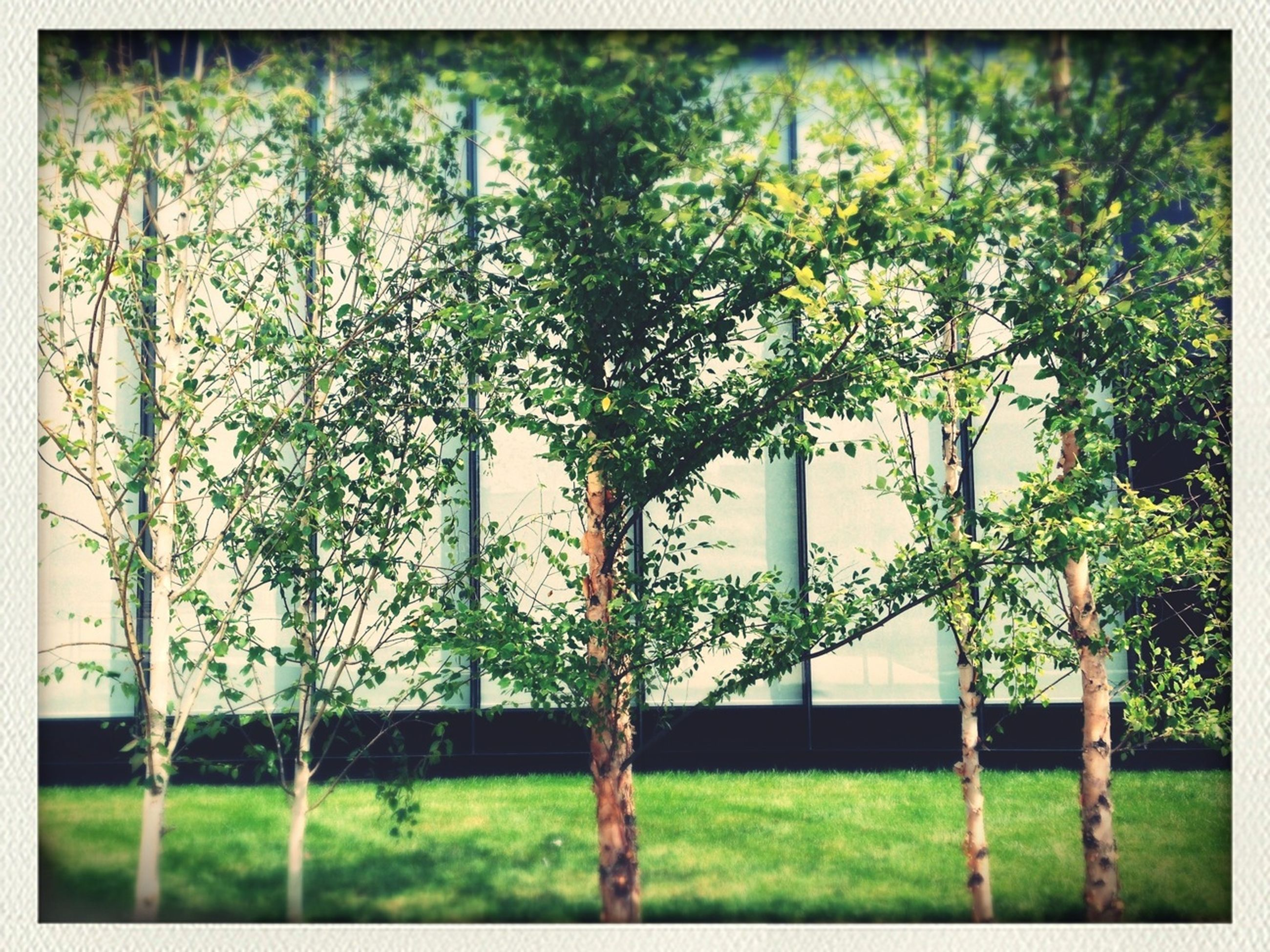 growth, transfer print, plant, tree, green color, flower, auto post production filter, fence, nature, built structure, building exterior, front or back yard, architecture, day, branch, outdoors, beauty in nature, no people, railing, freshness