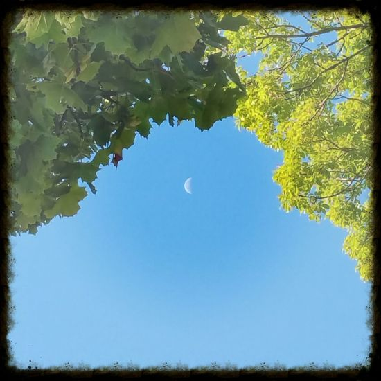 Autumn moon Blue Tree Clear Sky Low Angle View Branch Leaf Tranquility Growth Scenics Beauty In Nature Nature Tranquil Scene Day Green Color Outdoors Sky Green No People