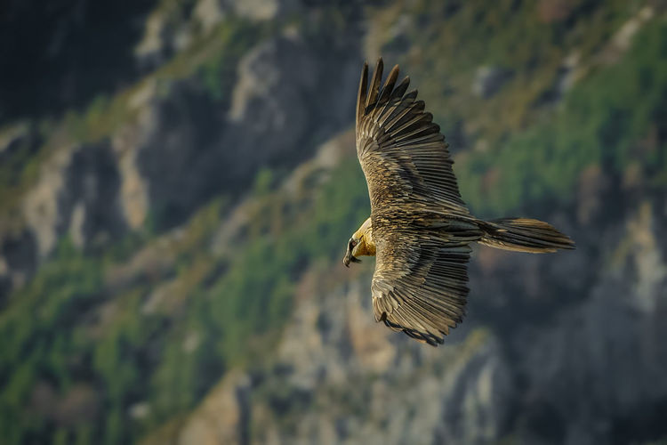High angle view of bird flying over landscape