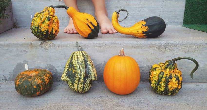 Food And Drink Food Freshness Orange Color Culture Outdoors Garden Flowers Yellow Cucurbita Pepo Autumn Collection Autumn Colors Colors Of Autumn EyeEm Diversity