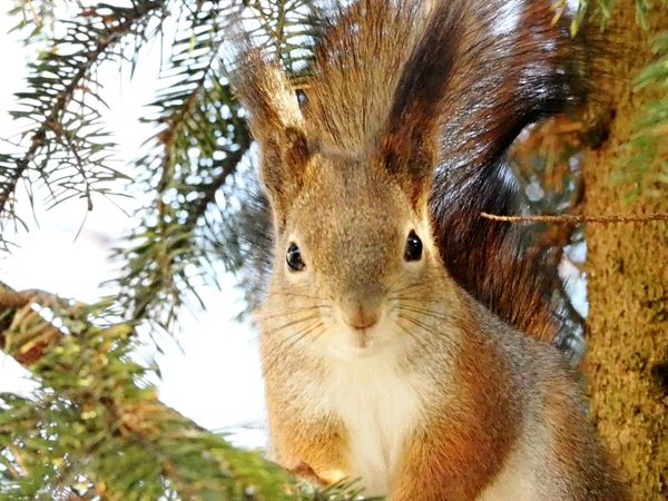 Looking At Camera One Animal Portrait Animal Themes Close-up No People Mammal Nature Animals In The Wild Animal Wildlife Beautiful Nature Winter Nature Outside Squirrel Closeup Squirrel On Branch Branch Nature Animals In The Wild Tree Beauty In Nature