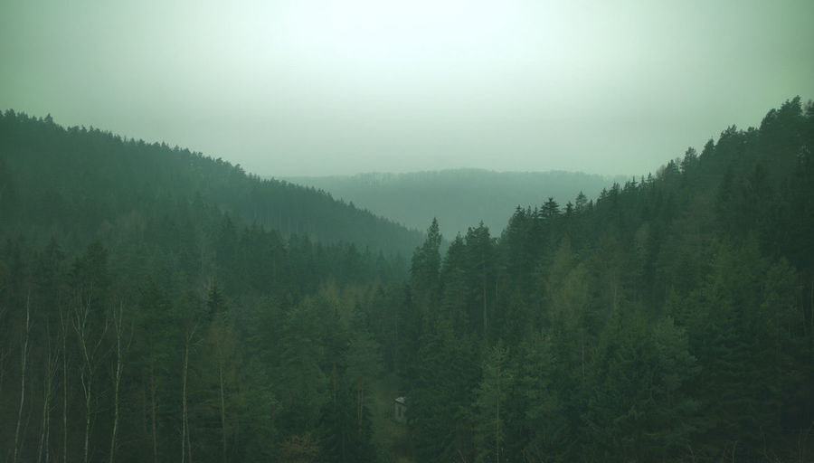Beauty In Nature Day Fog Foggy Forest Green Color Growth Idyllic Landscape Lush Foliage Mountain Mountain Range Nature No People Non Urban Scene Non-urban Scene Outdoors Plant Remote Scenics Sky Tranquil Scene Tranquility Tree Weather Market Reviewers' Top Picks