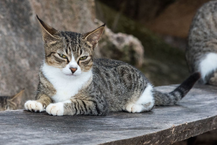 Close-up of cat sitting on wood