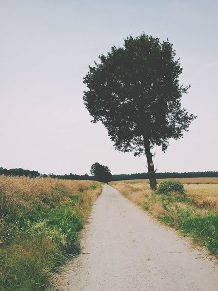 Tree Rural Scene Landscape Agriculture Field Sky Nature Scenics No People Beauty In Nature Tranquility Road Outdoors The Way Forward Day Grass Breathing Space EyeEm Selects Nature Beauty In Nature Green Color The Week On EyeEm Perspectives On Nature The Great Outdoors - 2018 EyeEm Awards The Traveler - 2018 EyeEm Awards The Photojournalist - 2018 EyeEm Awards