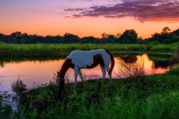 EyeEm Best Shots Tadaa Community EyeEm Nature Lover Nature_collection Arcadia, FL