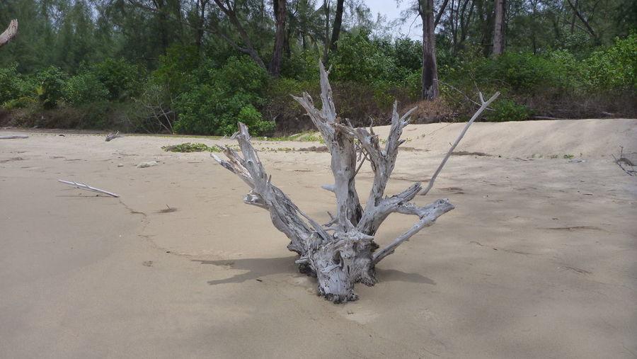 Natural Beauty Natural Sculpture Nature No People The End Tree Trunk Wood Wood Sculpture Tsunami Area Tsunami