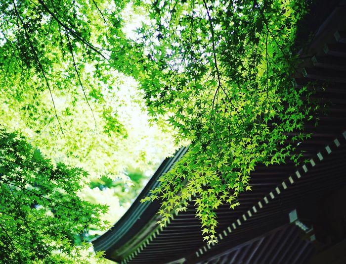 #summer #shrine