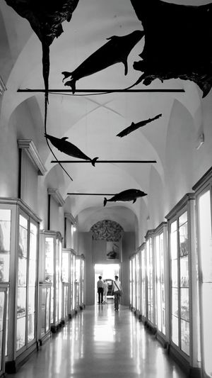 IgersAbruzzo Igersreggioemilia Scienza Museo Palazzodeimusei