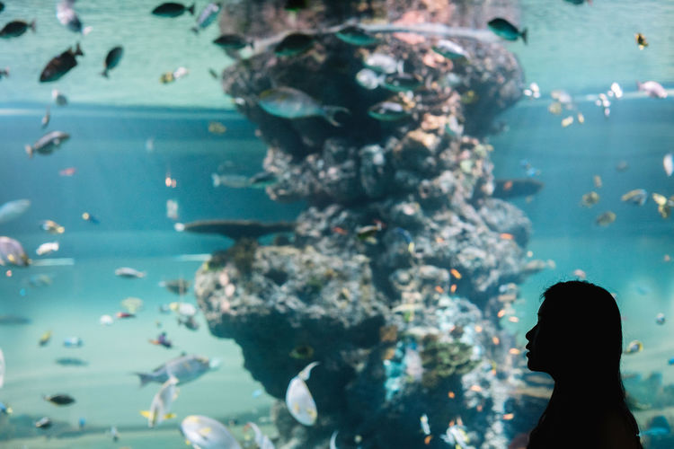 Silhouette woman standing by fish tank at aquarium