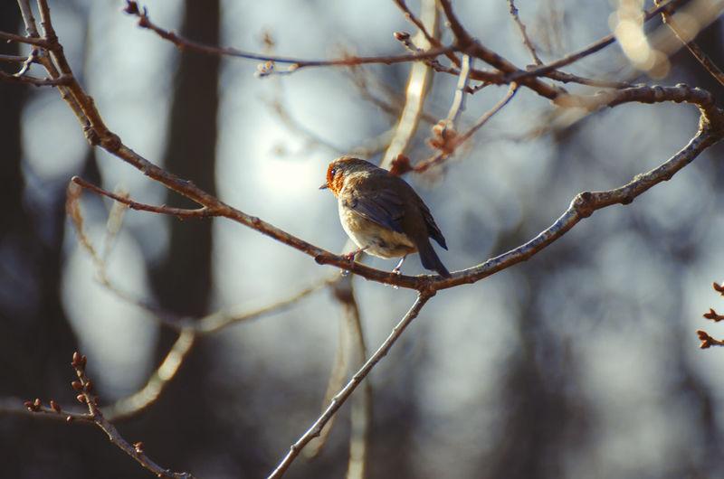 Close-up of bird perching on tree