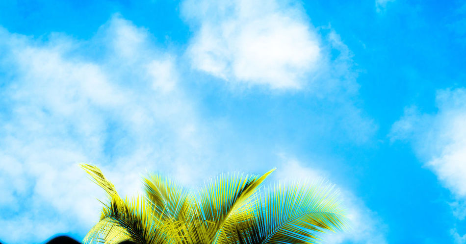 Nature Blue Sky Cloud - Sky Outdoors Green Color Beauty In Nature Growth Low Angle View Day Plant No People Palm Tree Leaf Frond Tree Fragility Green And Sky Freshness Low Angle View Sky And Clouds Skyline Close-up Sky Skyporn