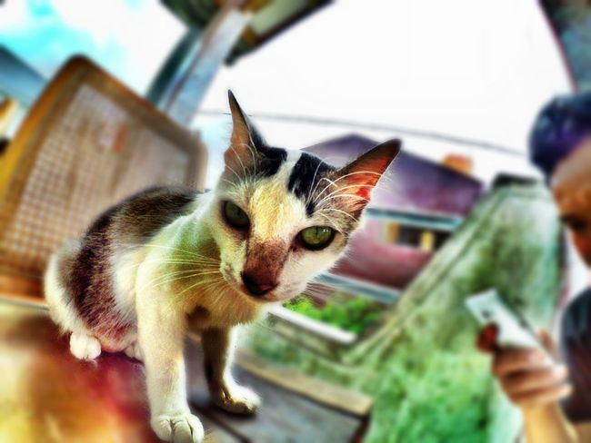 🐈🐱Cat Photography Cat Eyes Cat♡ Cats Of EyeEm Catstagram Cat Catoftheday Cat Lovers Pets Of Eyeem Catworld INDONESIA