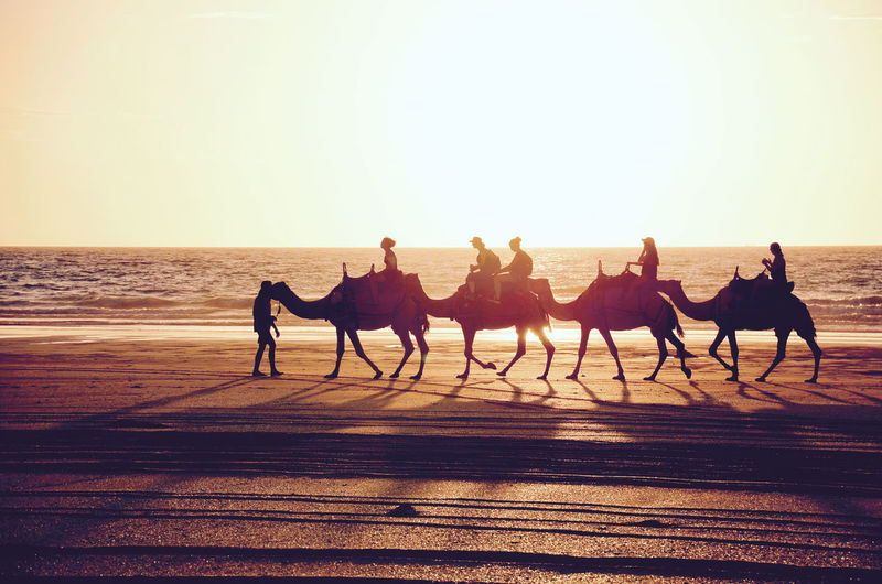 Side view of people riding camel at beach against sky