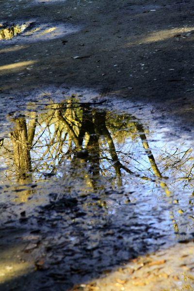 Riflessi Giocare Con La Luce Acqua 2016😍 Tree Albero Pozzanghera Inverno Streetphotography Street Photography Passeggiando Canon 7D in Cascine Firenze Firenze