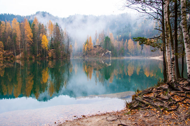 Trees Reflecting On Calm Lake During Autumn