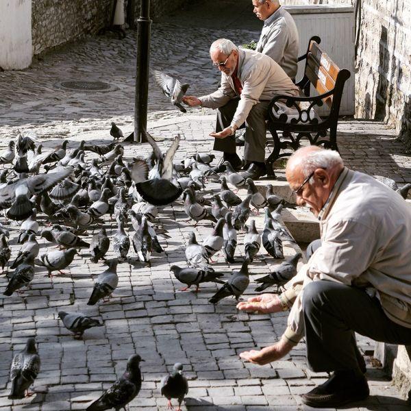 Old men are feeding the peageons. Senior Adult Senior Men Bird Gray Hair People Peageon Mosgue Life Mercy  Love Old Men