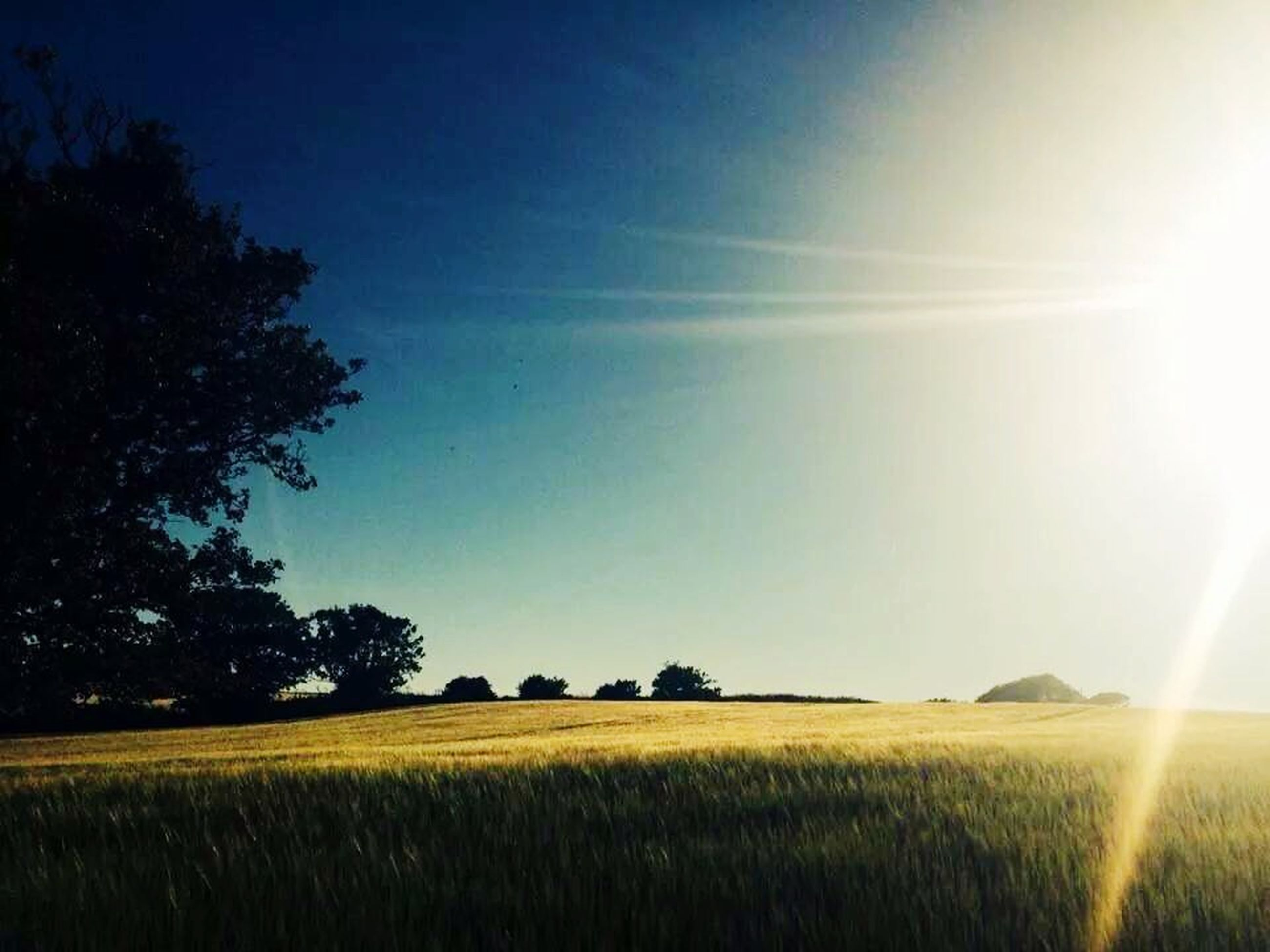 field, landscape, tranquil scene, tranquility, tree, rural scene, sunbeam, sun, beauty in nature, growth, sunlight, agriculture, scenics, grass, nature, farm, crop, clear sky, lens flare, sky