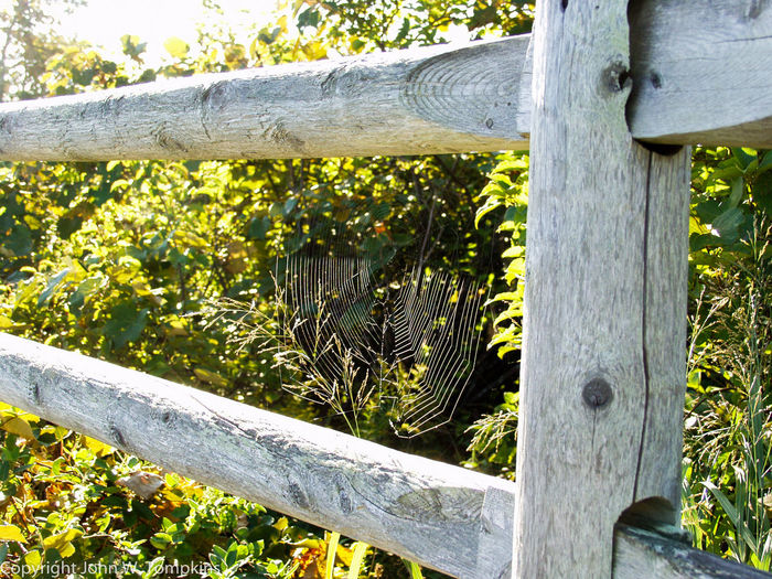 Spider web on fence Beauty In Nature Close-up Day Fence Fragility Green Green Color Growing Growth Nature No People Outdoors Plant Spider Web Split Rail Fence Tranquility Wood - Material Wooden