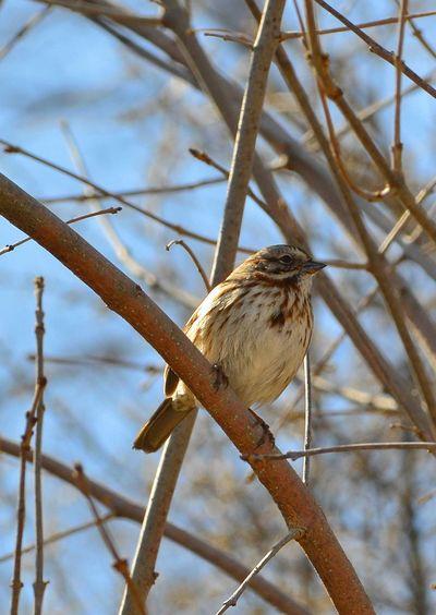 Tiny bird Finch Outdoors Day Winter Bird Perching Tree Branch Sky