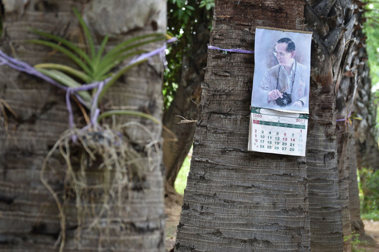 Sugar Palm Calendar Close-up Day King Nature No People Outdoors Thailand Tree