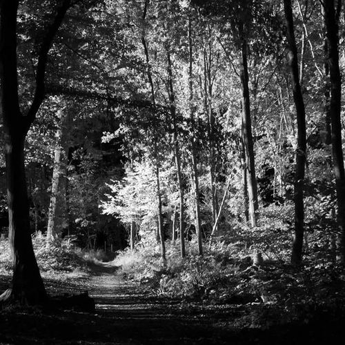 Tree Tree Nature Forest No People Tranquility Forest Photography Nature TheWeekOnEyeEM Blackandwhite Light And Shadow Black & White Black And White Beauty In Nature