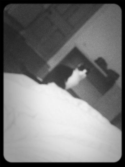 Cat Goodmorning Cute Blackandwhite