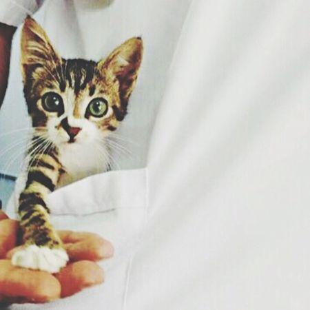 صور رمزياتBBM Photo صور_رمزية رمزيات_منوعه First Eyeem Photo رمزياتي رمزيات  Photo♡ Cat
