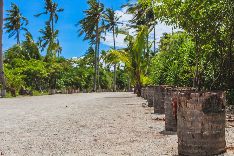 Kalanggaman Island Philippines Beach Beauty In Nature Beauty In Nature Day Direction Footpath Green Color Growth Kalanggamanisland Land Leyte, Philippines Nature No People Outdoors Plant Sky Sunlight The Way Forward Tree Treelined Tropical Climate