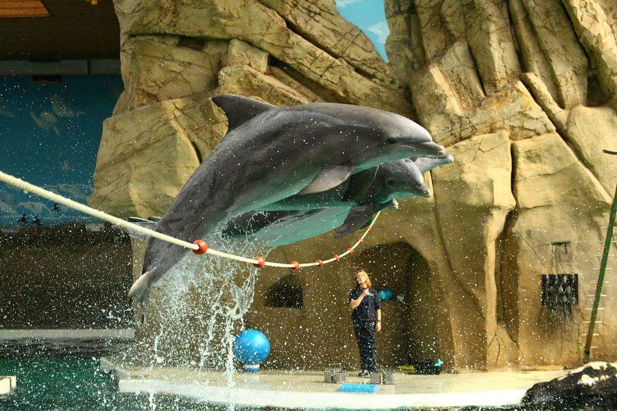 Zoo Delphin Animal Photography