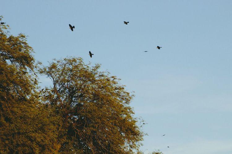 Bird Tree Nature Outdoors