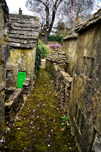 miniature town Model Village Photowalktheworld Nikonphotographer Nikonphotography Countryside Cotswolds Bourton On The Water Flower Tree Architecture Building Exterior Built Structure Sky Plant Life Country House Green
