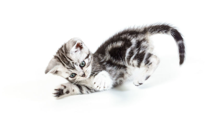 Cat relaxing on white background
