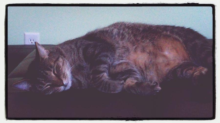 Kitty!  Cute Pets My baby is sleeping... Awww <3