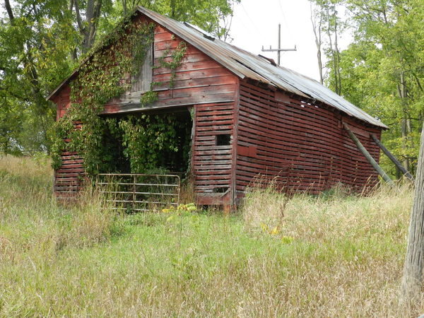 Reclaimed Bad Condition Barn Building Exterior Damaged Deterioration Grass Grassy Growth Michigan No People Old Reclaimed By Nature Green Red Wood Sky Growth Process Grasses Old Barn Old Building  Deteriorating Building Gate Michigan Shed Barns