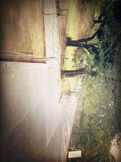 At 姫路城
