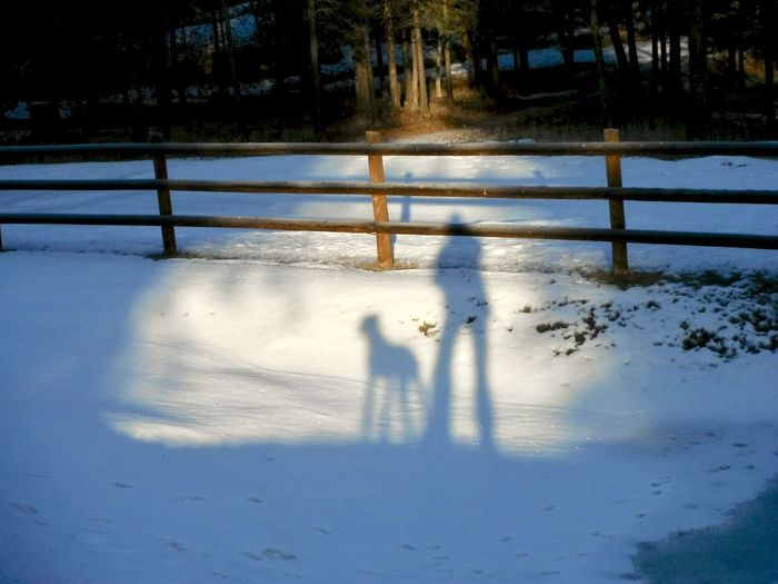Light Art Shades of Winter Shadow And Light Shadows & Lights Cold Temperature Ligth And Shadow Shadow Snow Snow And Shadow Winter Winter Shadows Woman & Dog