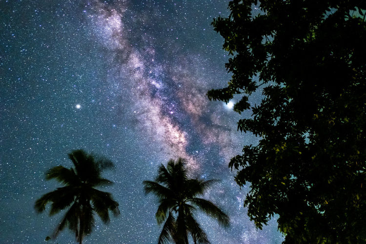 Tree Sky Plant Low Angle View Beauty In Nature Star - Space Scenics - Nature Nature Tranquility Palm Tree No People Tranquil Scene Growth Space Tropical Climate Night Astronomy Galaxy Silhouette Outdoors Milky Way Coconut Palm Tree Star Champasak Nightphotography