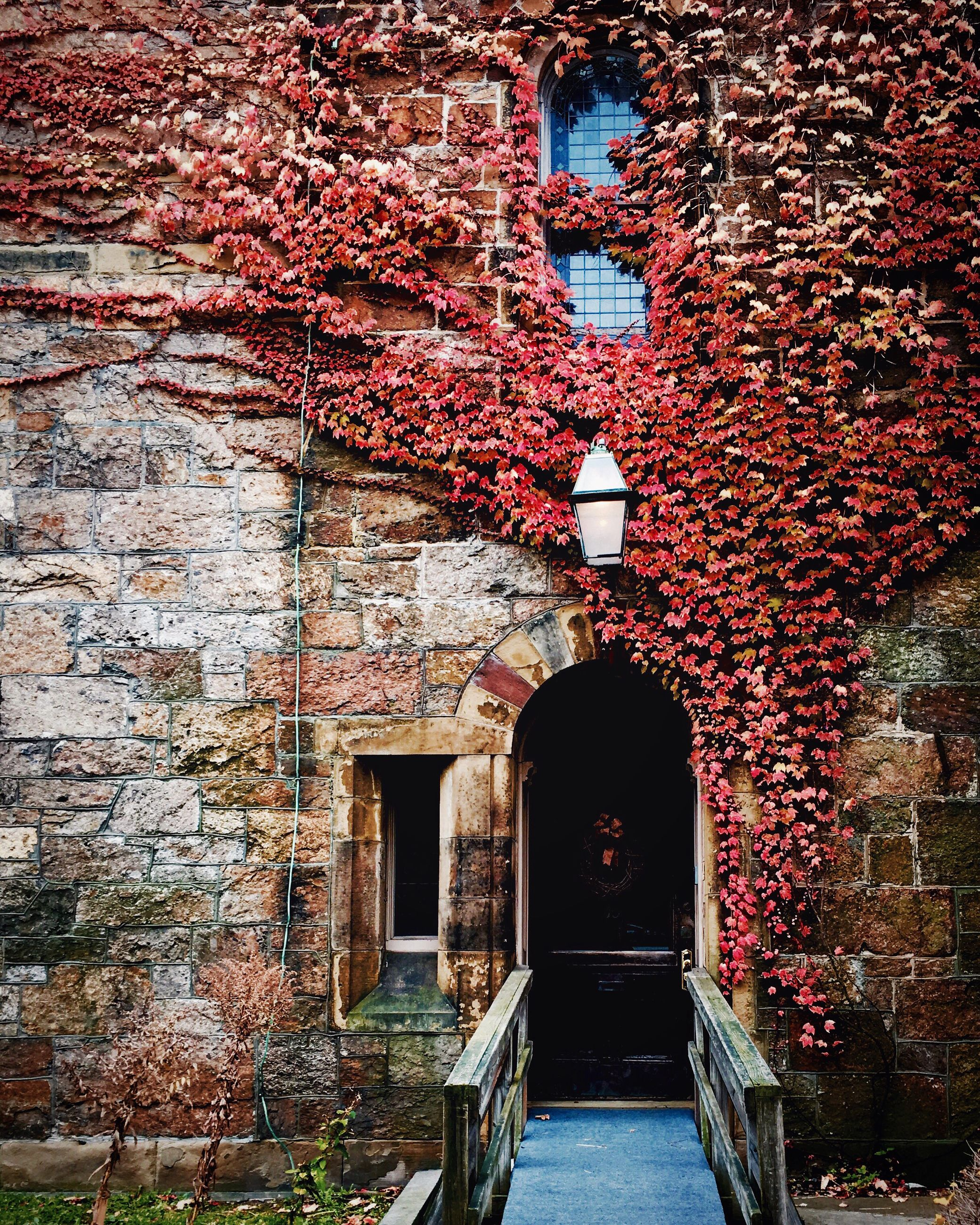 building exterior, architecture, built structure, house, window, residential structure, residential building, brick wall, ivy, old, stone wall, door, tree, outdoors, wall - building feature, building, day, no people, growth, plant