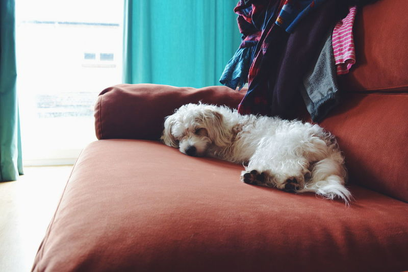 Sleeping Close-up Comfortable Day Dog Domestic Animals Domestic Cat Domestic Room Feline Home Lying Down Mammal Pet Collar Pets Relaxation Relaxing Resting Sleeping Sofa