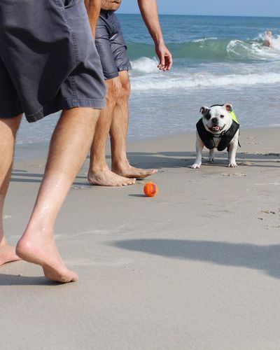 Low section of men with bulldog at beach