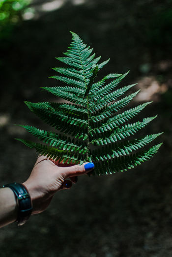 Green Green Green Green!  Green Color Nailpolish Nature Nature Photography Plant Plants Wood Close Up Close-up Fern Greenleaves Humanhand Leaf Leaf Vein Mountain Nature_collection Naturelovers Plants And Flowers