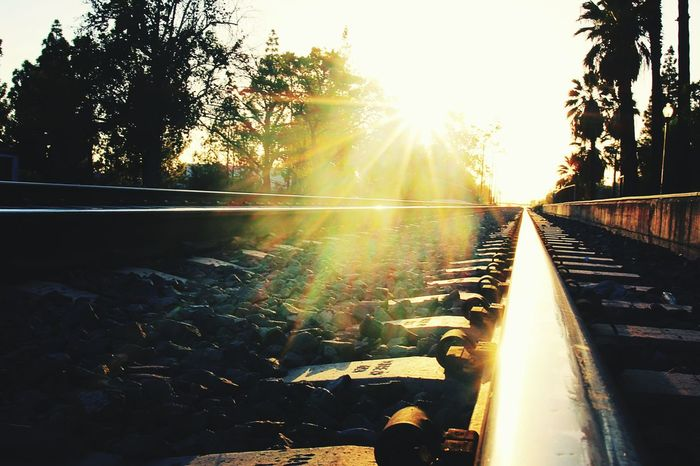Down The Tracks Rail Railroad Railroad Track Sunshine Sunlight Sun Rays Rock Trees Sunset Evening Dusk Transportation Bright Sun Eyeem Market EyeEm IShootFromMyWheelchair Perspective Close-up Gopro
