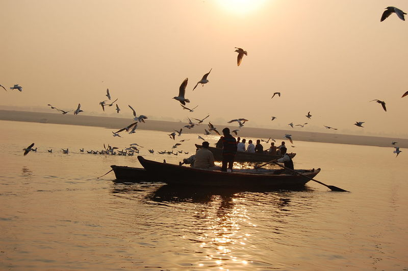 People looking at flock of birds flying over river during sunset