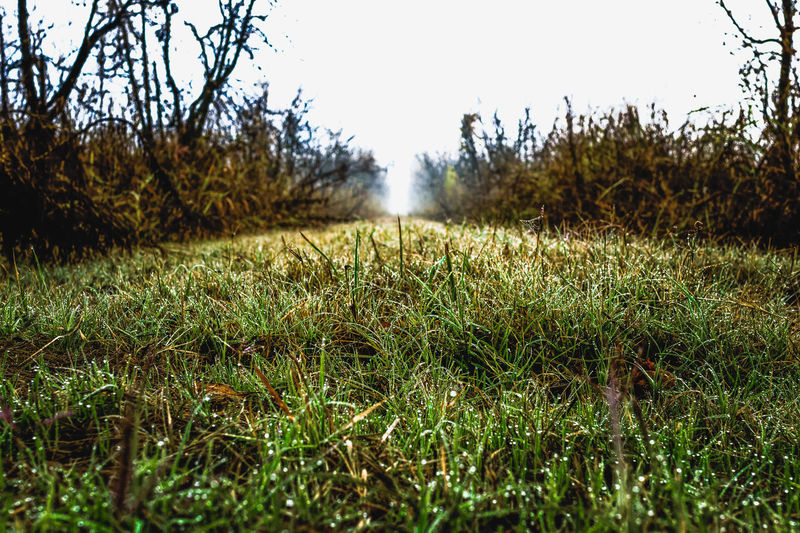 Looking down the rows of Almond Trees on a Foggy Morning in the Central Valley Agriculture Beauty In Nature Close-up Dark Day Field Freshness Grass Grassland Green Color Growth Moody Nature No People Outdoors Sky Taking Photos Tranquility Tree