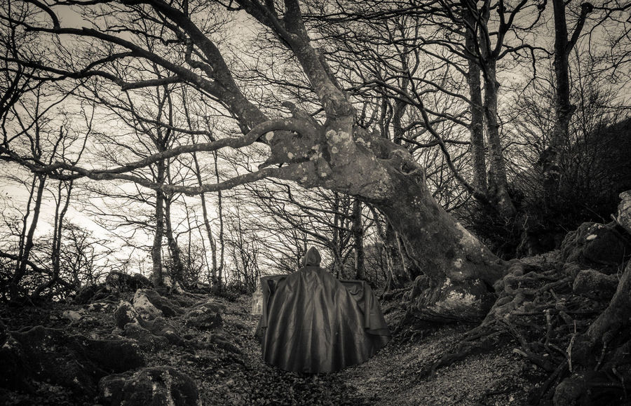 Obscure presence in the dark woods Atmosphere Autumn Dark Fear Ghost Gothic Halloween Halloween Horrors Presence Wood Black And White Branch Creepy darkness and light Forest Infested Land Mountain Obscure Scenics - Nature Secret Spooky Tranquil Scene Trunk WoodLand