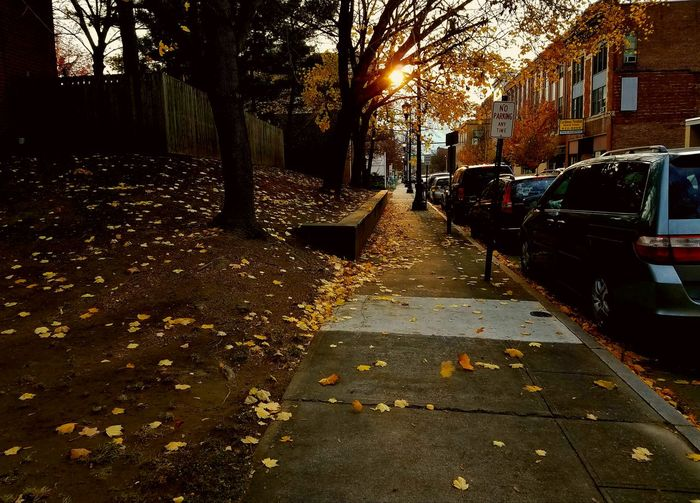 Car Street Mode Of Transport Nature Sidewalk Leaves Sun Wilkes-Barre Pennsylvania United States Outdoors Transportation Wet Road Land Vehicle The Way Forward Tree No People Day Sky Tree And Sky Mobilephotography Simple Photography Wilkesbarre Pennsylvaniaphotography