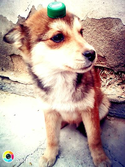Собака -друг человека One Animal Dog Pets Animal Themes Portrait Domestic Animals Mammal No People Day Close-up Outdoors First Eyeem Photo