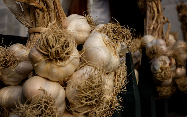 Garlic Bulbs Garlic Anti Oxidant Close-up Flavoring Food Food And Drink Freshness Garlic Bulbs Hanging Garlic Healthy Eating Herbal Herbal Medicine Nutritious Pungent Strong Smell