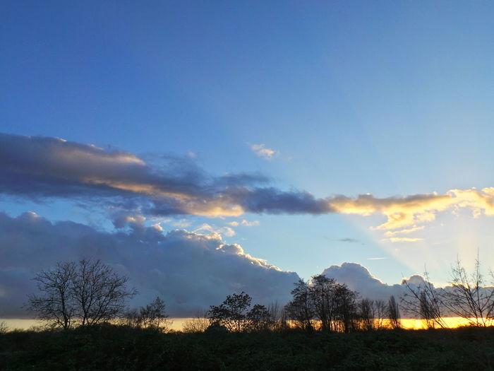 Abend Blauer Himmel Blue Sky Bäume Cloud - Sky Cloudscape Dramatic Sky Dusk Evening Evening Sky Germany Himmel Und Wolken Leipzig Silhouette Sky And Clouds Sonnenuntergang Sunset Trees